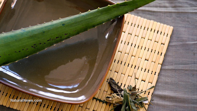 Aloe-Plant-Bowl