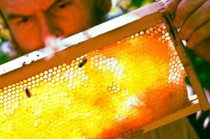 Flickr-honey-comb-David-Goehring-300x199