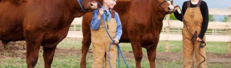 Children-Farm-Cattle-Cows-Dairy